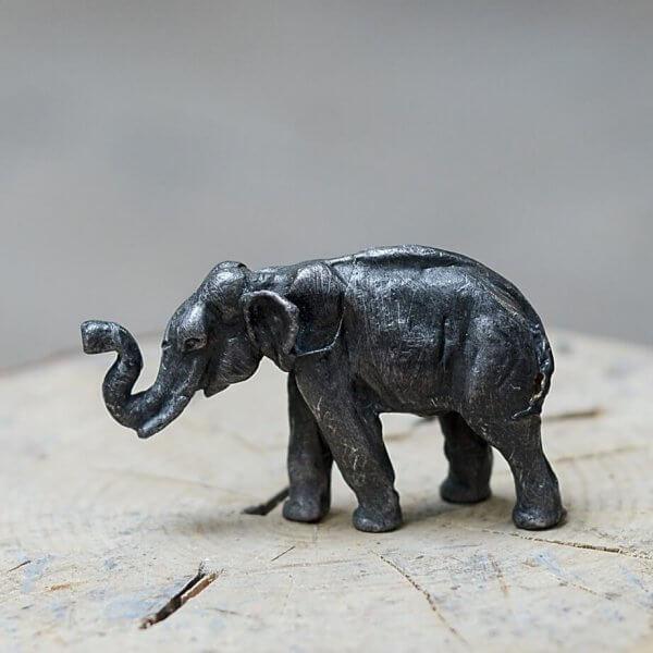 Slon africký 2